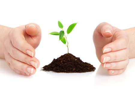 Human hands hold and preserve a young plant Stock Photo - 2407191