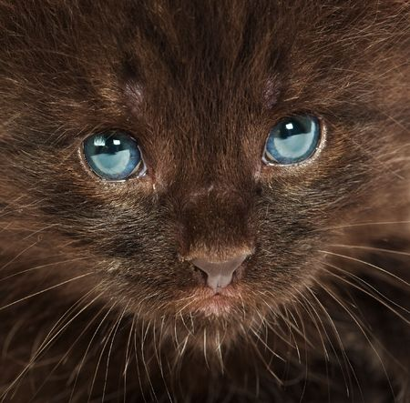 Portrait of a small kitten ... photo