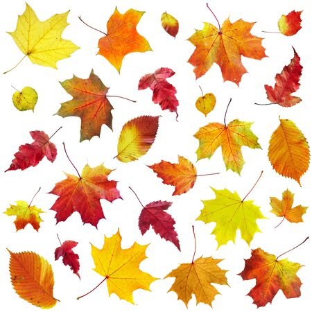 Autumn leaves on a white background... photo