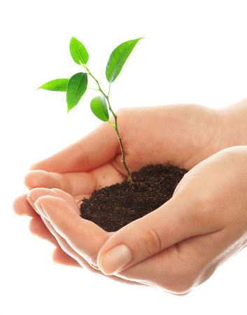 Human hands hold and preserve a young plant photo