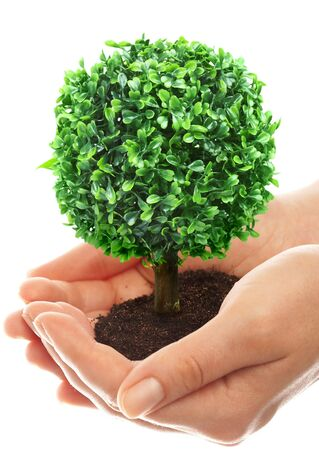 Human hands hold and preserve a young tree