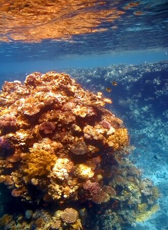 Coral reef in Red sea... Stock Photo - 4155544