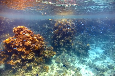 Coral reef in Red sea... Stock Photo - 4155545