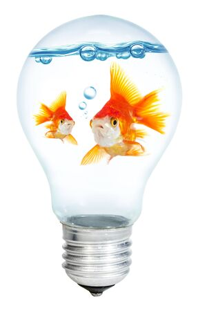 watts: Gold small fish in light bulb on a white background