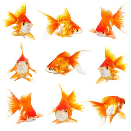 Gold small fishs on a white background photo