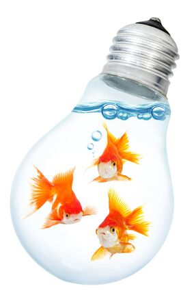 watts: Gold small fish in light bulb Stock Photo