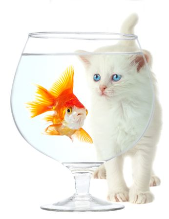 White a kitten and a gold small fish. Stock Photo