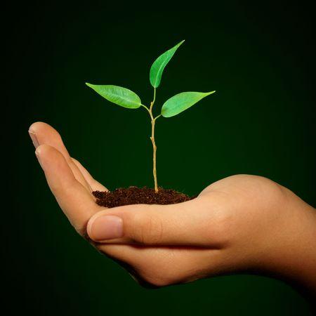 planta con raiz: Pareja brotar en una mano Foto de archivo
