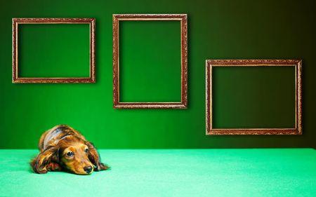 Dachshund cachorro sobre un fondo verde Foto de archivo