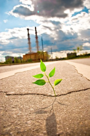 Young plant makes the way through asphalt on city road. photo