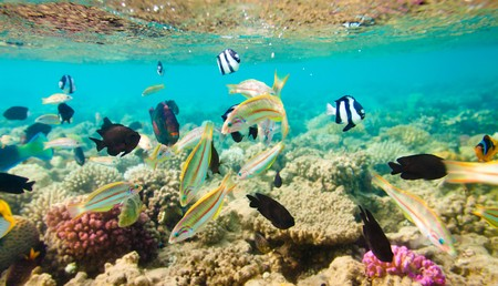 reef with a variety of hard and soft corals and tropical fish photo