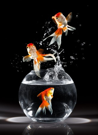 goldfishs jumps upwards from an aquarium on a dark background photo