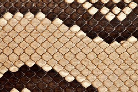 snake skin pattern: Background, texture of a skin of a snake close up Stock Photo
