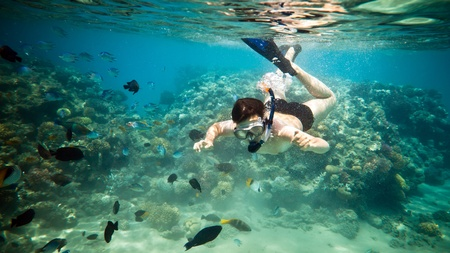 adventure travel: Snorkeler diving along the brain coral Stock Photo