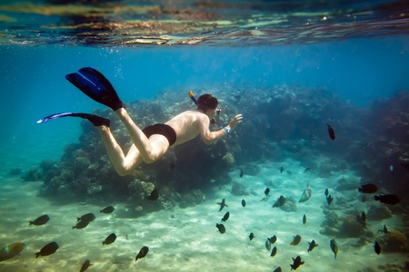 Snorkeler diving along the brain coral Stock Photo - 9423003