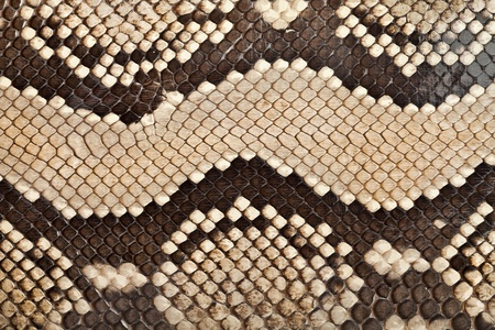 Background, texture of a skin of a snake close up Stock Photo - 9423046