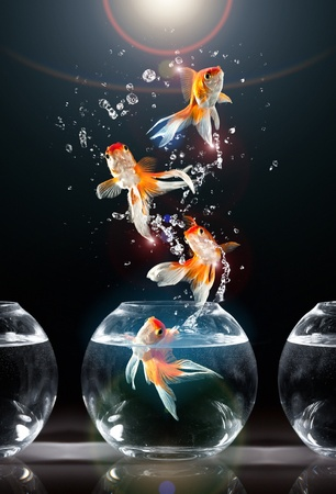 emergence: goldfishs jumps upwards from an aquarium on a dark background