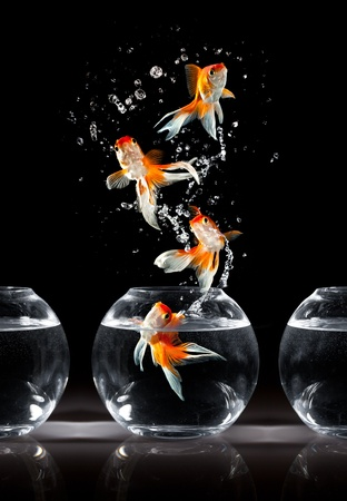 goldfishs jumps upwards from an aquarium on a dark background Stock Photo - 10548232