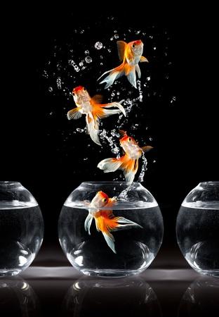 Goldfishs saute vers le haut d'un aquarium sur un fond sombre