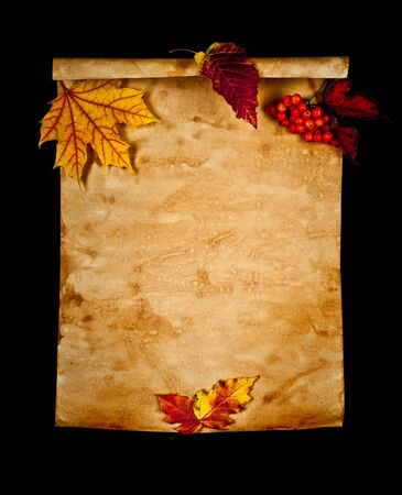sycamore: Old paper with autumn leaves on black background isolated