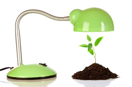 Young sprout and table lamp on a white background ... photo