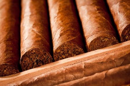 cigar smoke: Some cigars lay in humidor Stock Photo