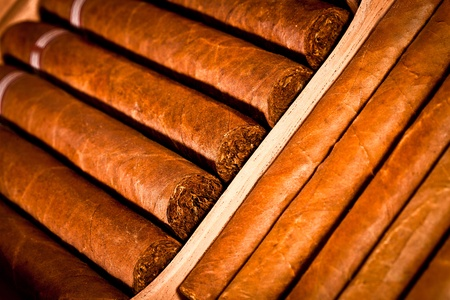 Some cigars lay in humidor photo