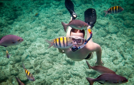 brain coral: Snorkeler diving along the brain coral Stock Photo