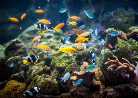 fishes in an aquarium ... photo