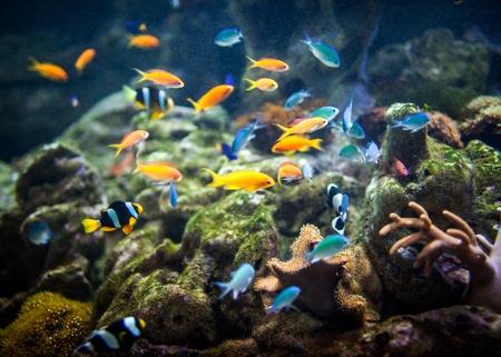 fishes in an aquarium ... photo
