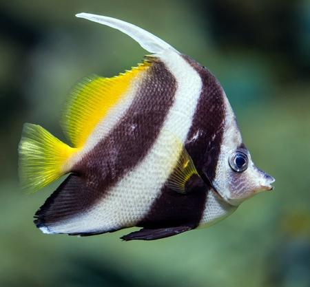 in an aquarium photo