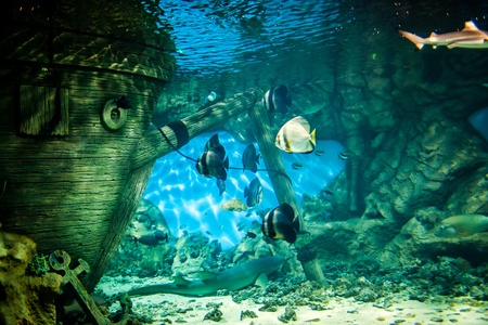 Fishes in Oceanarium photo