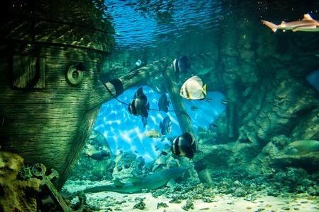 pez pecera: Los peces en el Oceanario
