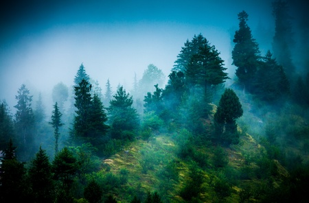 Fog in the morning forest photo