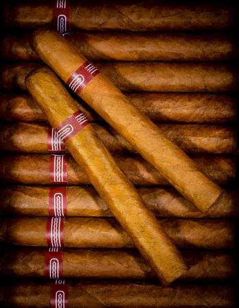 Nahaufnahme von Zigarren in offenen Humidor box