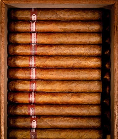 Close up of cigars in open humidor box photo