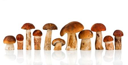 edulis: Orange-cap Boletus and porcini mushroom on a white background Stock Photo
