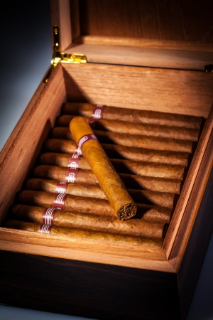 cigars: Close up of cigars in open humidor box