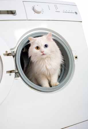 Washer machine and white cat photo
