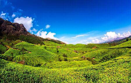 tea plantations: Landscape of the tea plantations in India, Kerala Munnar. Stock Photo