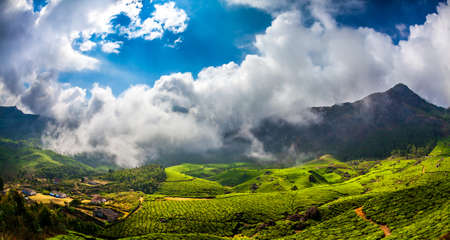Landscape of the tea plantations in India, Kerala Munnar. photo