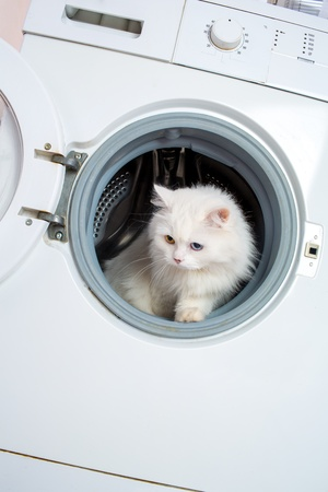 Washing machine and white cat photo