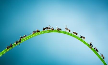 Team van mieren lopen rond de gebogen groen grassprietje op een blauwe achtergrond