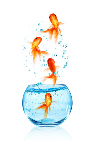 goldfishes: Goldfish jumping out of the aquarium isolated on white background. Search of freedom. Stock Photo
