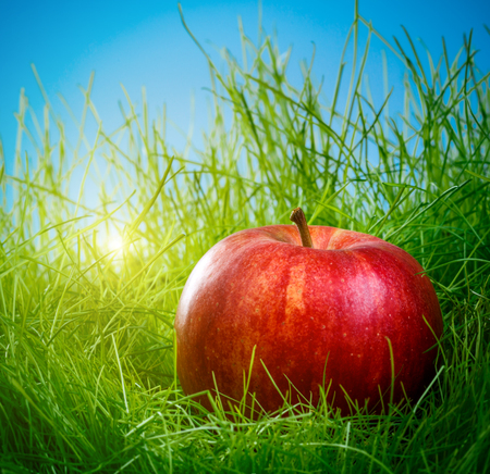 Red apple on the green grass photo