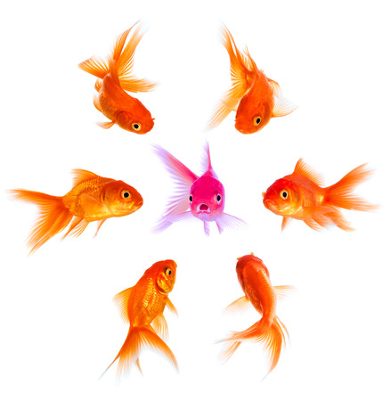outcast: Concept with goldfish. Condemnation and disapproval of the crowd.
