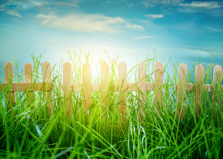 Garden grass and wooden fence on blue sky background photo