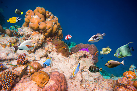 Reef with a variety of hard and soft corals and tropical fish. photo