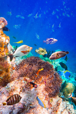 tropical fresh water fish: Reef with a variety of hard and soft corals and tropical fish. Stock Photo