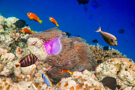 Reef with a variety of hard and soft corals and tropical fish. Maldives Indian Ocean. Stock Photo - 28566502